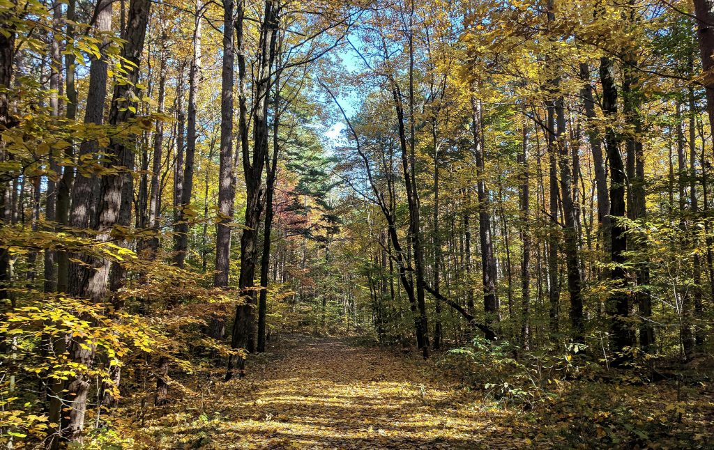 Fall colors on a trail in the Hoosier National Forest