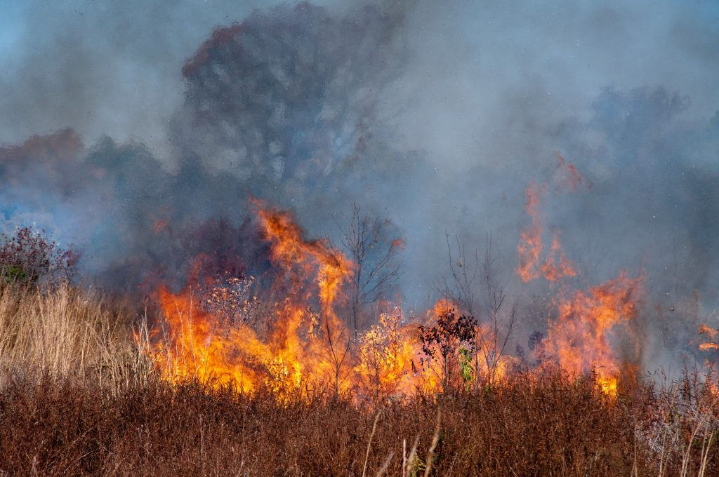 A wildfire tears through a patch of dry brush