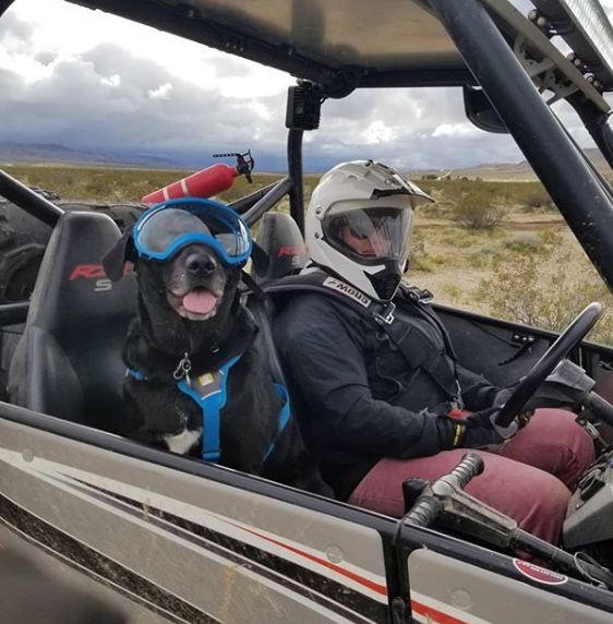 River, an adventuring Labraheeler, rides shotgun next to her mom, Jessy.