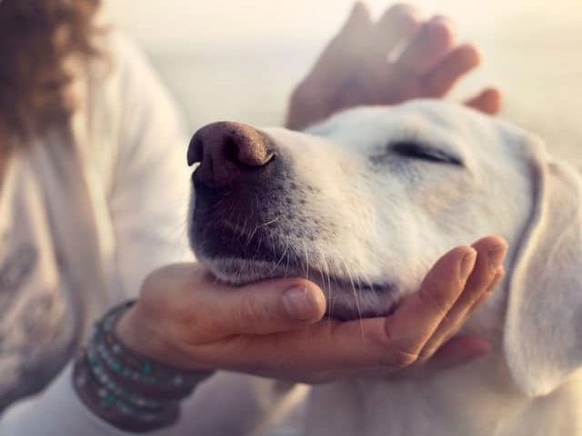Pamper Your Pup on Spoil Your Dog Day