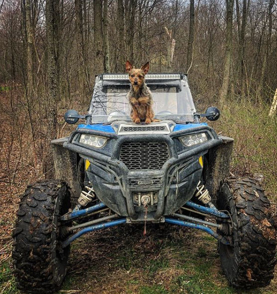 Off-roading pup Tallie, a Yorkie/Blue Heeler mix, poses on the hood of her parents' machine.