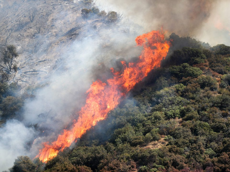 A wildfire tears through the San Bernadino National Forest in California