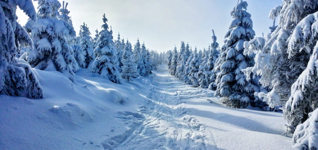 A snow covered trail through a boreal forest.